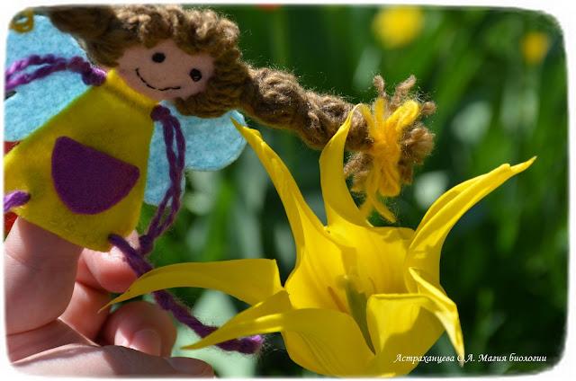 stroenie-okolocvetnika-i-chashechki-cvetka-magija-biologii-tjulpan-palchikovaja-igrushka-feechka-prostoj-okolocvetnik