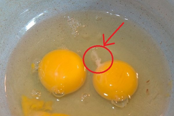 Have You Ever Noticed The White String Inside A Raw Egg, Here's What It Is