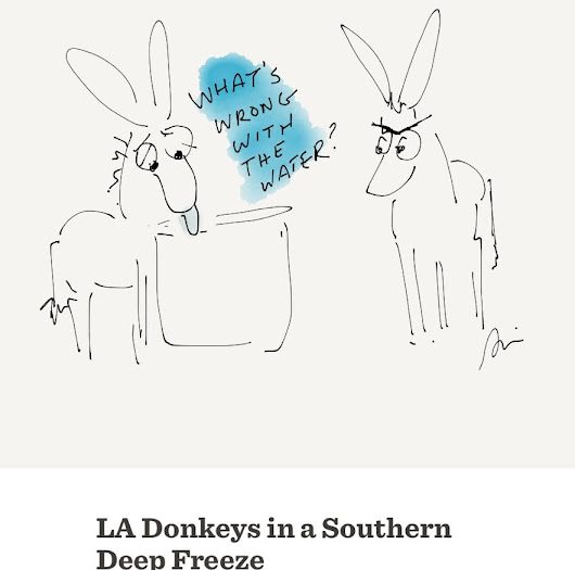 LA Donkeys in a Southern Deep Freeze