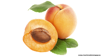 apricot fruit free clipart