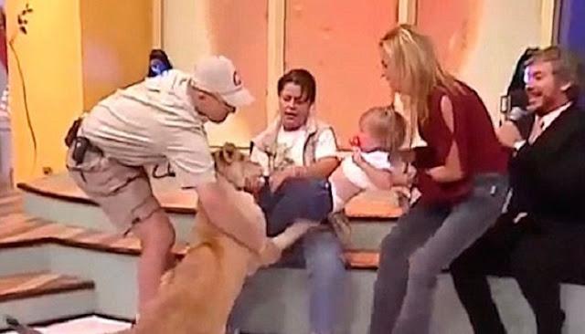 Un león ataca a una bebé en un programa en vivo
