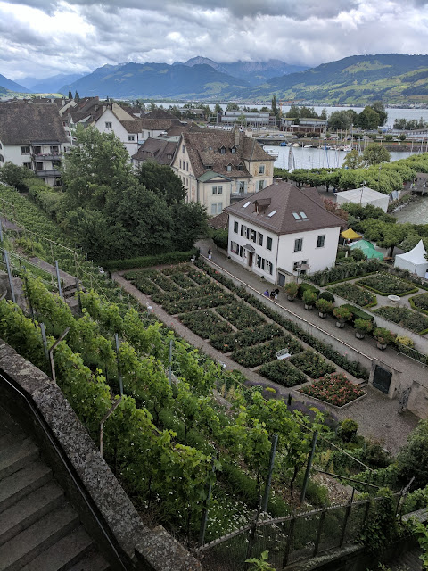 View of the hillside vineyards in Rapperswil, Switzerland