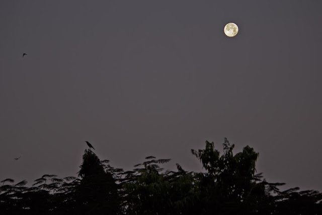 super worm equinox moon, bandra, mumbai, skywatch, birds, incredible india