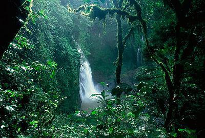 Yasuní - Ecuador