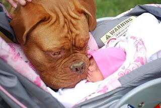 Relação  entre cães e bebês