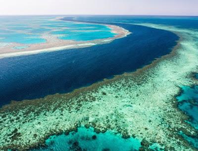 Fertilidade dos corais da Grande Barreira está sofrendo grande impacto