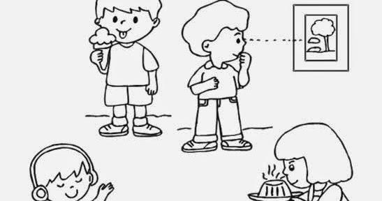 Reforzando Aprendizajes Los Sentidos Ficha De Los Sentidos Para