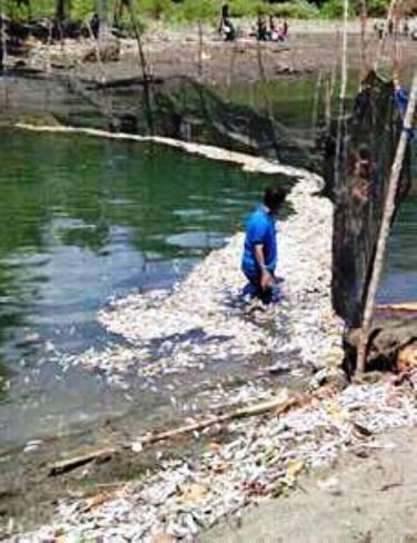 Ribuan Ekor Ikan Mati, Tanpa, Sebab, Yang ,Jelas ,Di ,Muara ,Sangkulu-Kulu ,Kec. Bontosikuyu