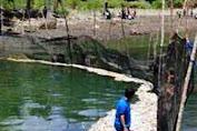 Ribuan Ekor Ikan Mati Tanpa Sebab Yang Jelas Di Muara Sangkulu-Kulu Kec. Bontosikuyu