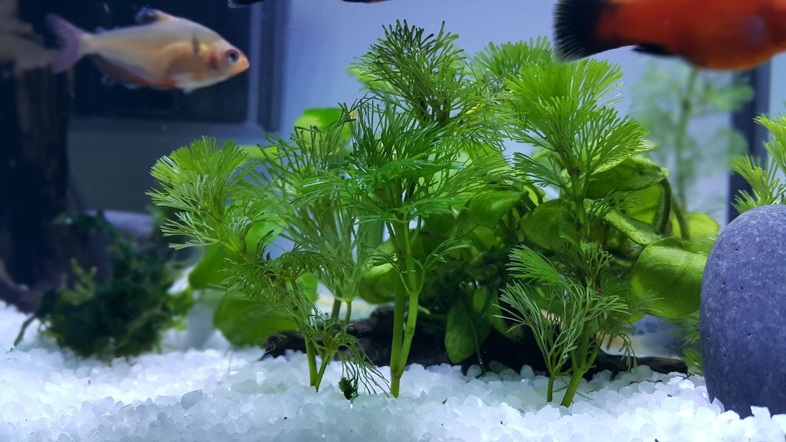 Blog of amir rofie aquascape kongsi gambar ikan - Gambar aquascape ...