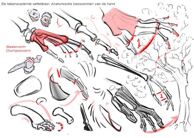 hand tekenen, handen tekenen, hoe teken je handen, copyrights: De tekenacademie