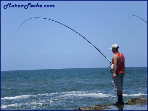 Pêche au pilota - الصيد بالبيلوطا