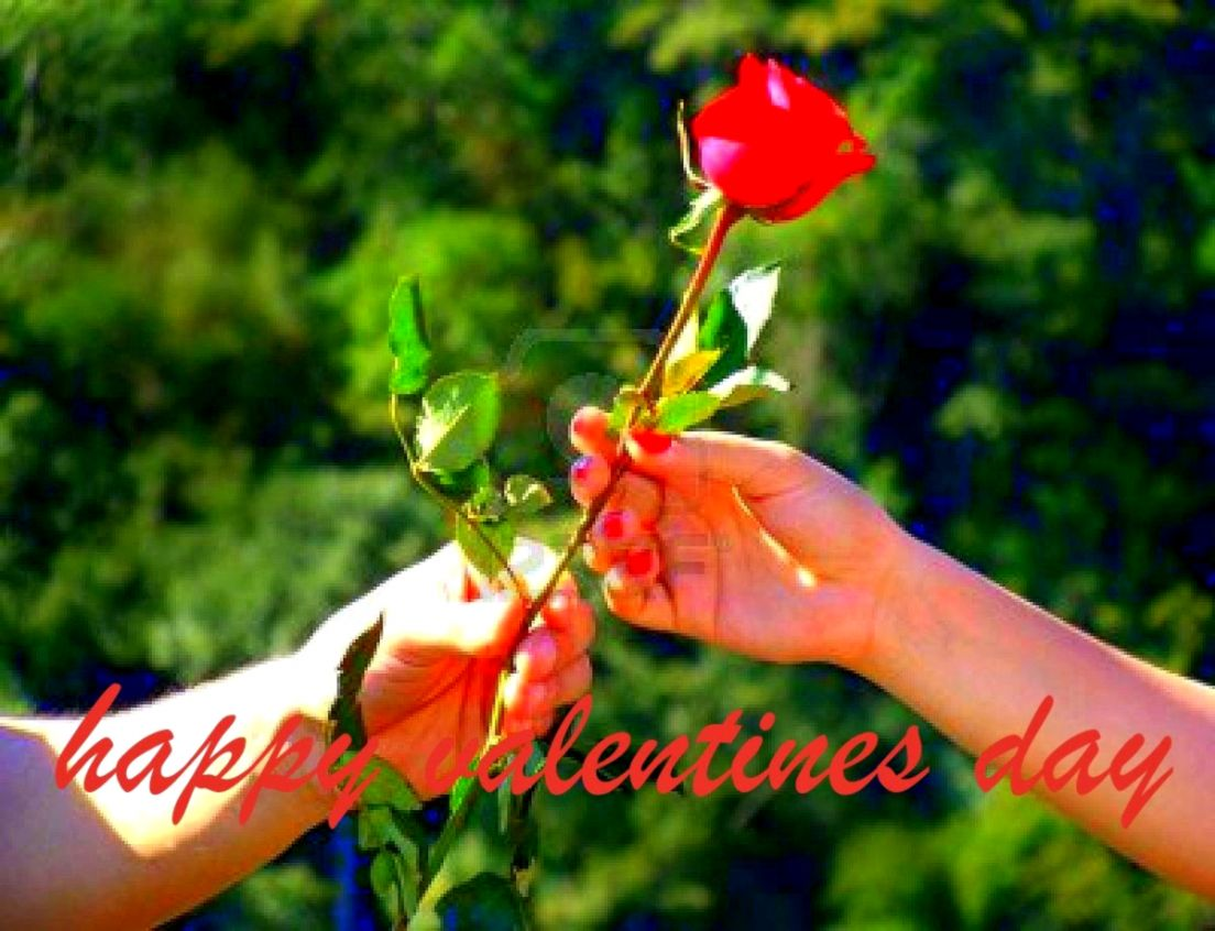 Happy Valentine Roses Wallpaper All In One Wallpapers