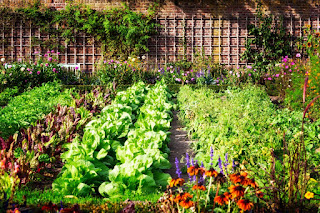 Amazing Vegetable Gardening Ideas