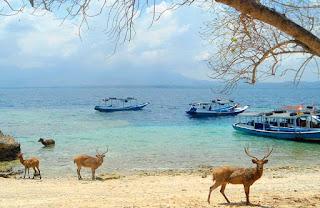 Rusa di Pulau Menjangan