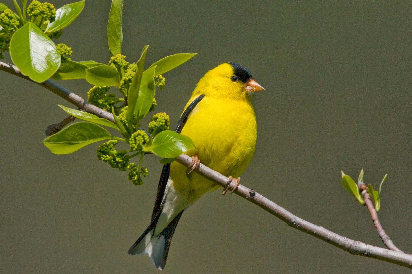 spring bird on a - photo #21