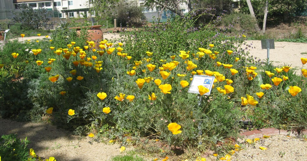 Mother Natures Backyard A Water Wise Garden Plant Of The Month