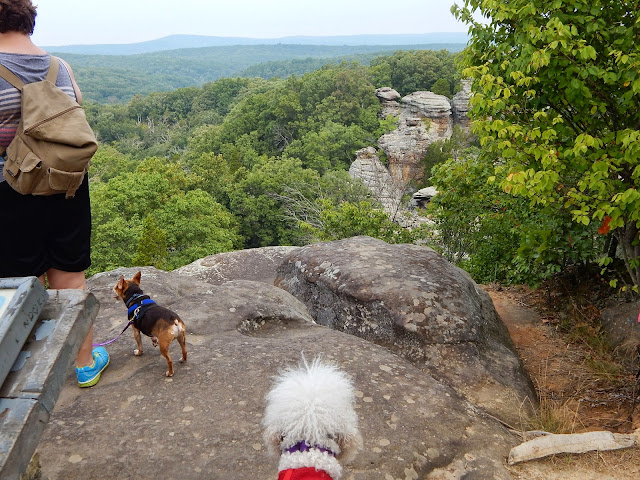 #Chihuahua and #Poodle Standing on the rock looking over the edge #CarmaPoodale