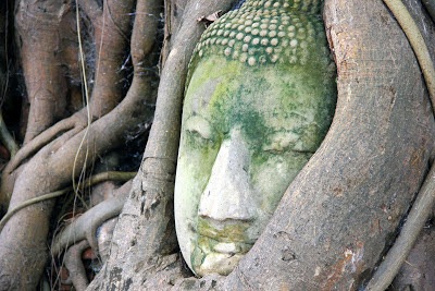 Head of Buddha from tree branches - Ayutthaya
