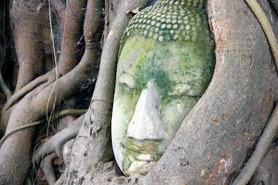 Tête de Bouddha aux branches des arbres - Ayutthaya