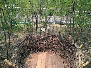 Mempawah Mangrove Park 7