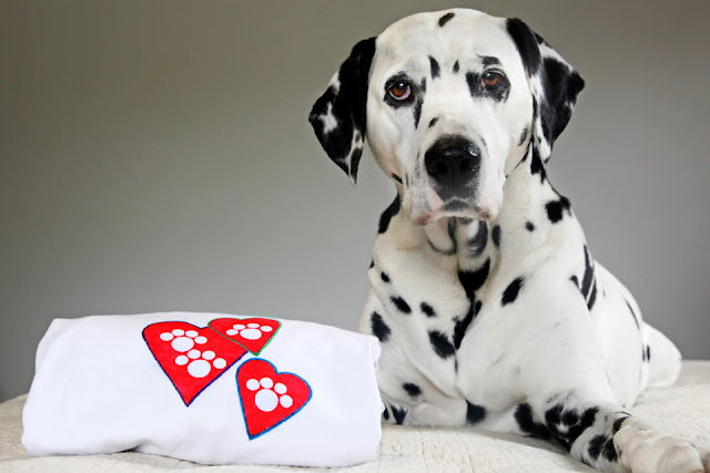 Dalmatian dog with homemade paw print heart t-shirt