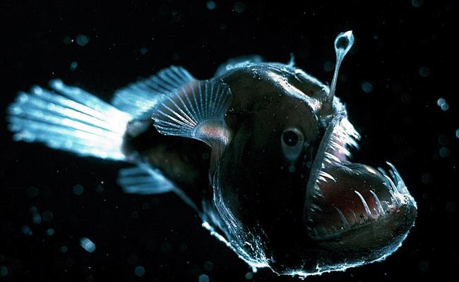 Ikan sungut ganda
