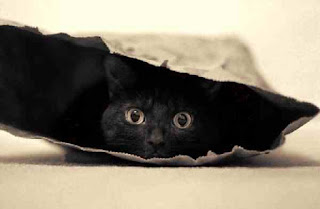 Hiding cat