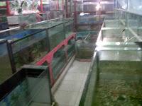 Bibit Ikan dan Ikan Hias