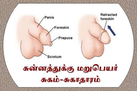 Image result for ஆண் குறி