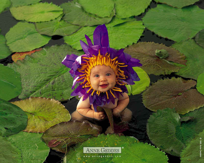 Anne Geddes Babies Images With Flowers.
