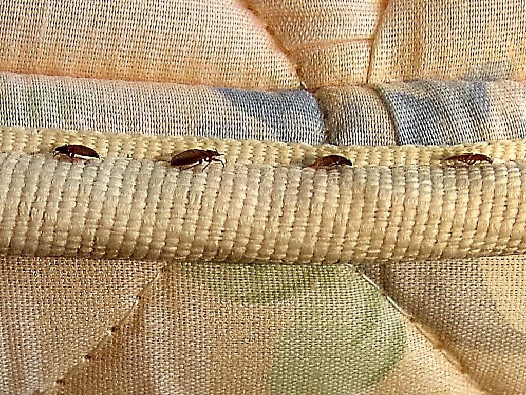 Fieggentrio: Beestjes in bed!!