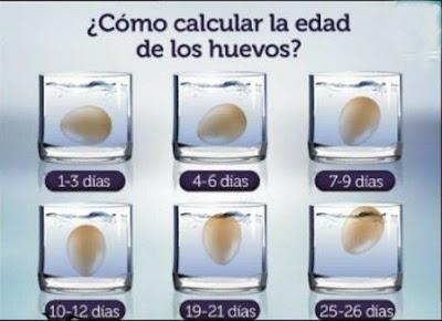 Aprende a calcular la edad de los huevos