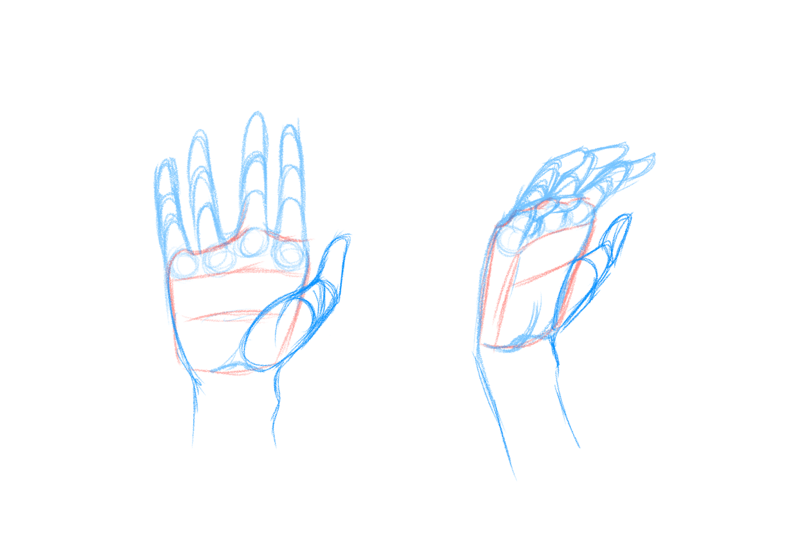 Draw The Thumb Joints Here I'm Drawing The Hands As Relaxed As Possible  And In A Neutral Pose Position