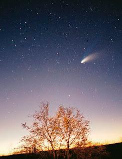 Imagen del cometa Hale pasando por encima de un árbol