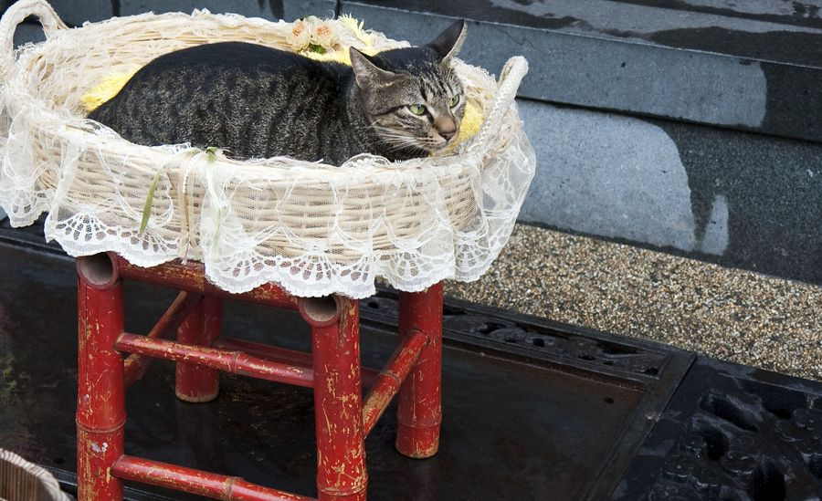 13. cats in basket by Hanson Mao