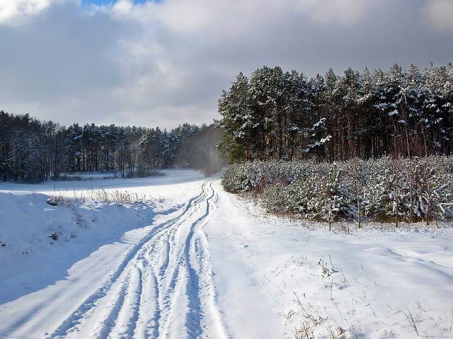 śnieg, las, polna droga, zawieja