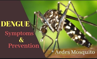 Dengue Symptoms And Prevention In Hindi