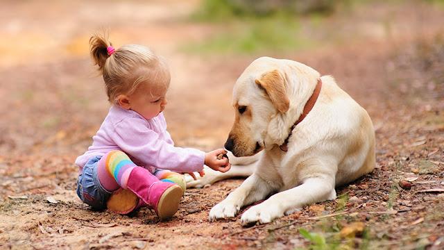 dicas para quem tem cachorro e crianca