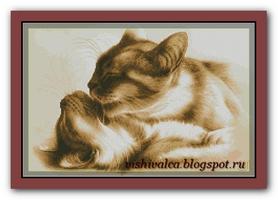 Кошки в теплых тонах