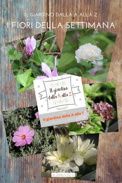 il giardino dalla A alla Z - i fiori della settimana - settembre