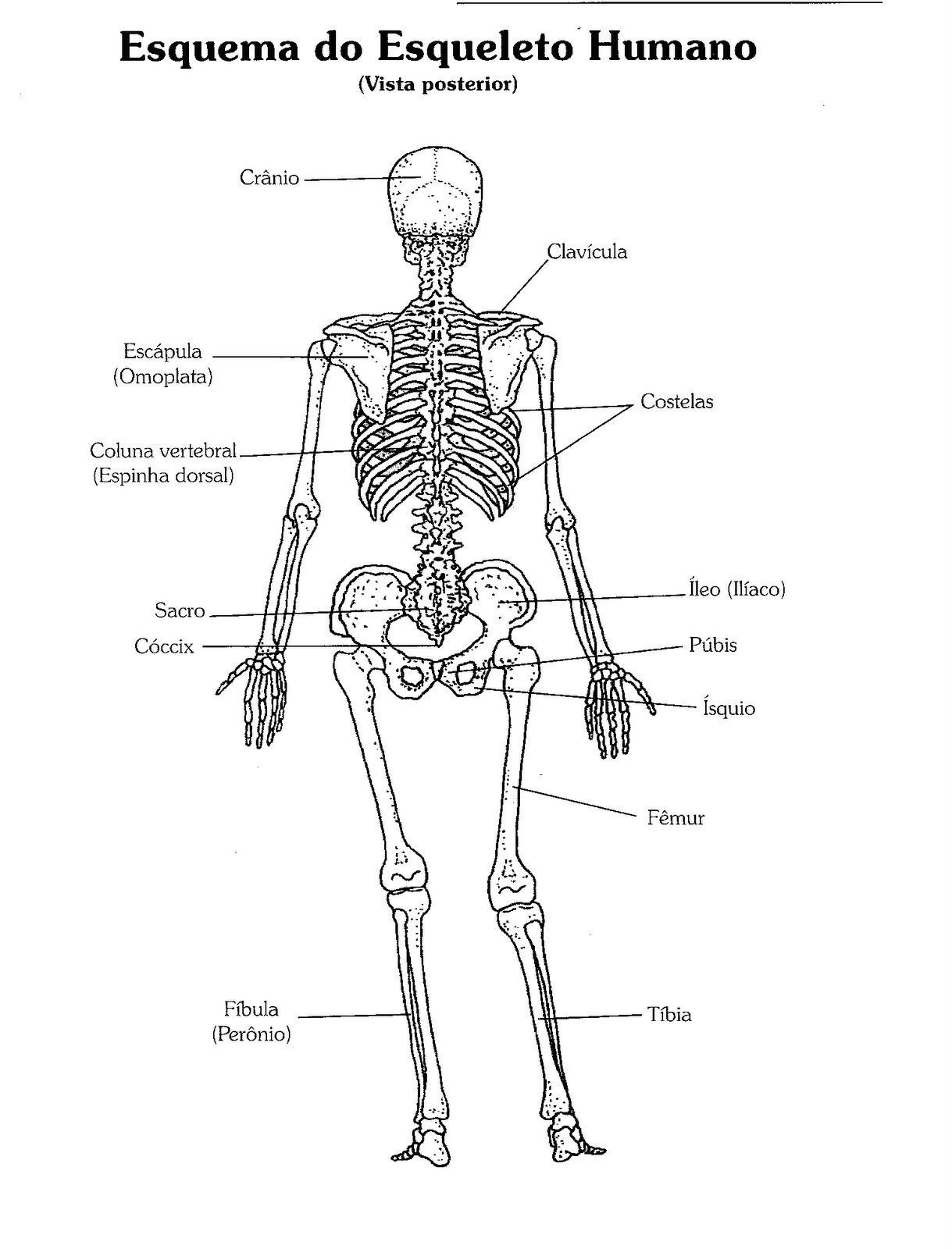 Livro Da Professora Corpo Humano