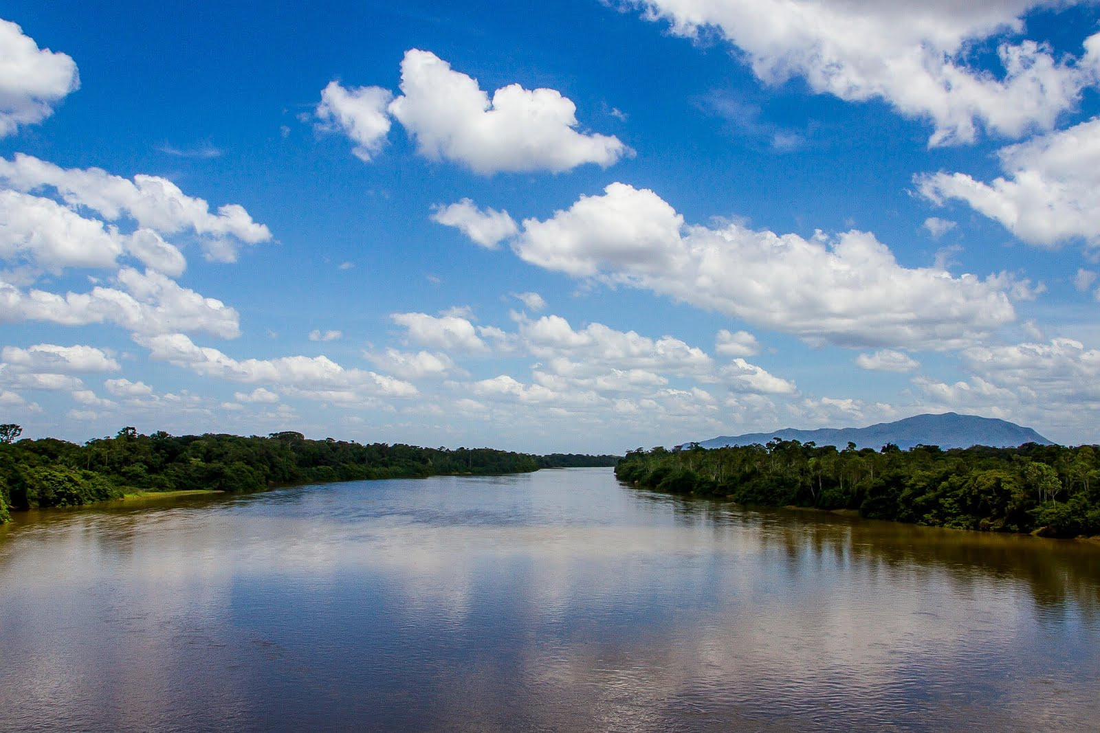 15 Amazing Amazon Rainforest facts you didn't know | Pahadi Travelers