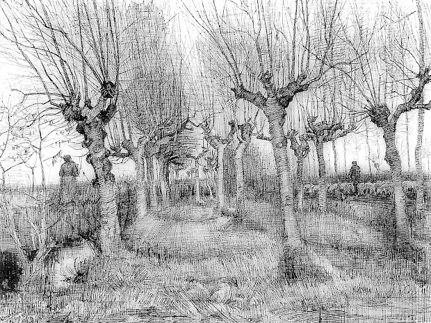 9876 Connecting Nature Drawing