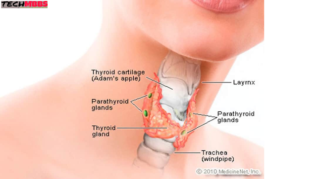 What type of thyroid disease or problem? Because of this, symptoms and treatment