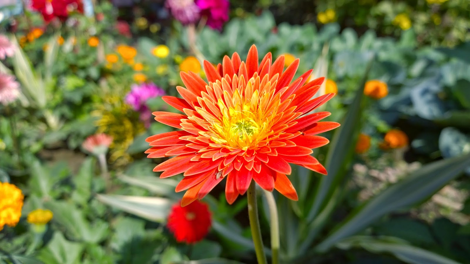 86 Pictures Of Indian Flowers With Names Flower Names Glitter Wallpaper Creepypasta Choose from Our Pictures  Collections Wallpapers [x-site.ml]