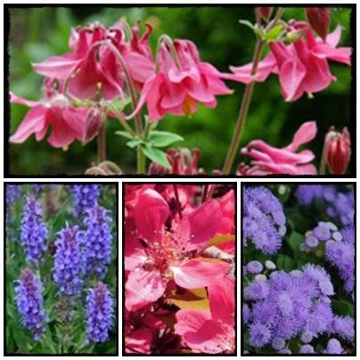 Jakie rośliny przyciągną motyle do naszego ogrodu? Jak wzbogacić naszą faunę w ogrodzie.