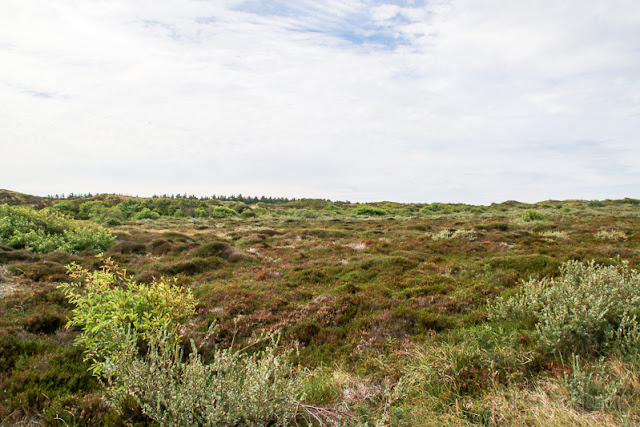 Dünen Ecomare auf Texel