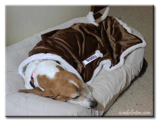 Basset hound snoozing under PrideBites sherpa blanket