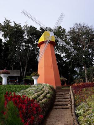 kincir angin ikonik negara Belanda taman bunga celosia